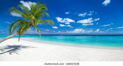 Playa de paraíso tropical con arena blanca y palmeras de coco concepto de fondo de panorama amplio de turismo de viaje