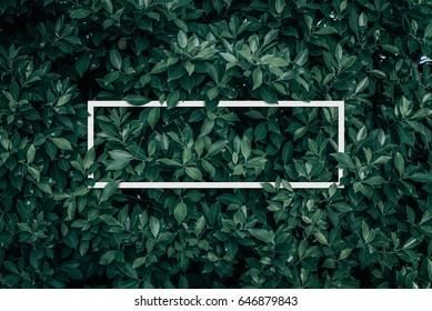 Quadratischer Rahmen, kreatives Layout mit grünem Blatthintergrund. Leer für Werbekarte oder Einladung. Naturkonzept. Sommerplakat.