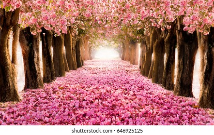 El romántico túnel de los árboles de flores rosas