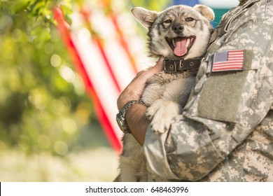 Soldier with military dog outdoors on a sunny day with american flag on the background