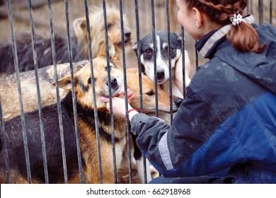 犬の保育園でボランティアをしている女の子。野良犬用のシェルター。