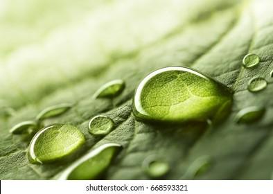 Grandes hermosas gotas de agua de lluvia transparente en una macro de hoja verde. Gotas de rocío en la mañana brillan en el sol. Hermosa textura de la hoja en la naturaleza. Fondo natural