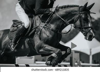Pferdesport, Pferdespringen, Springreiten