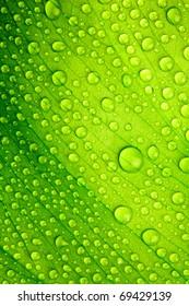 Hermosa hoja verde con gotas de agua