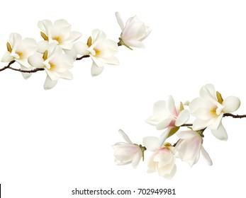 Schöner Magnolienblumenstrauß lokalisiert auf weißem Hintergrund.