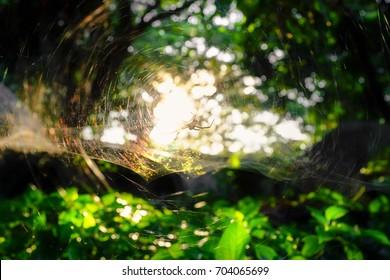 Das Licht geht durch Spinnennetz in der Natur bei Sonnenuntergang und hellem Bokeh-Hintergrund
