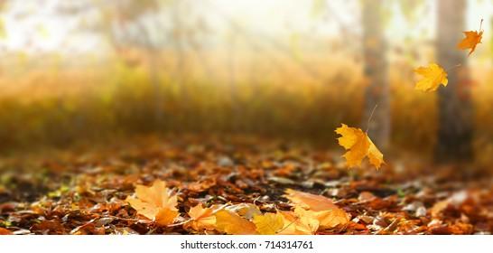 Schöne Herbstlandschaft mit gelben Bäumen und Sonne. Buntes Laub im Park. Fallender Blätter natürlicher Hintergrund