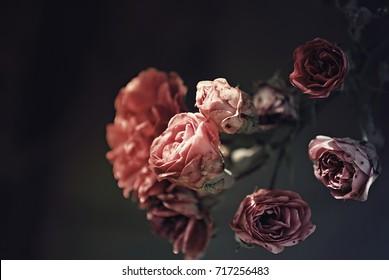 Rosen mit dunklem Hintergrund