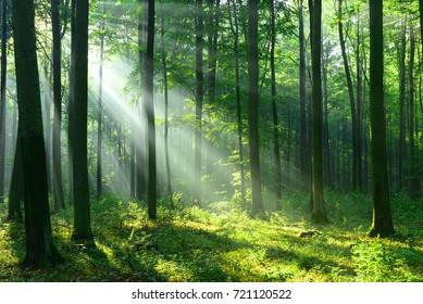 Paisaje forestal