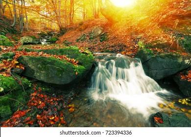 森の中のカラフルな秋の日の出風景、金の日光の森の滝の素晴らしいシーン、国立公園、ヨーロッパ旅行、小さな滝、美の世界、壁紙の背景画像