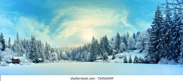 Winterwald in den Karpaten am Vitosee