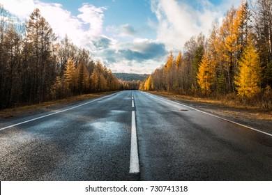 道路、秋の森の高速道路、カラマツ、松、風景、日