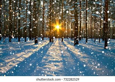 ländliche Winterlandschaft mit Wald, Sonne und Schnee. Sonnenuntergang im Winterwald. Sonnenstrahlen scheinen durch Bäume. winterlicher Sonnenaufgang.