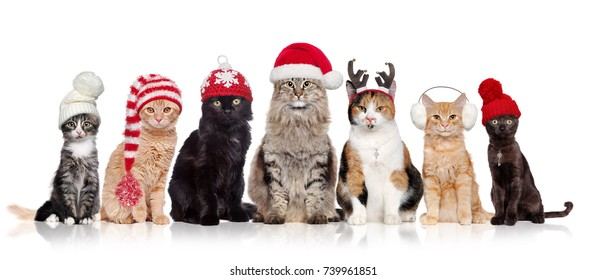 A group of cats sitting in a raw in a white background wearing christmas hats