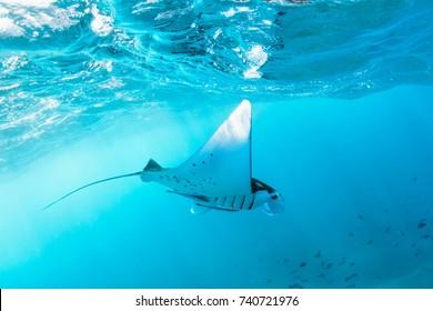 Onderwatermening van zwevende Reuze oceanische manta-straal (Manta Birostris). Kijken naar de onderzeese wereld tijdens een avontuurlijke snorkeltocht naar Manta Beach op het tropische eiland Nusa Penida, Indonesië.