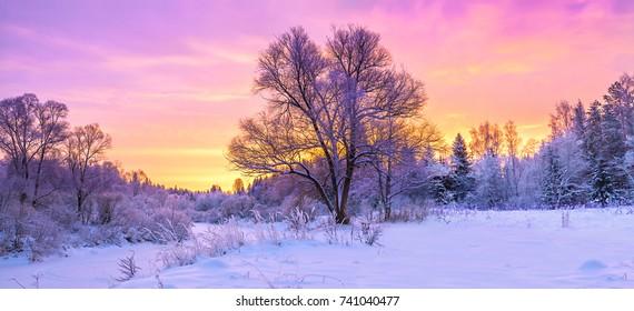 冬天全景景觀與森林,樹木覆蓋的雪和日出。新的冬天的早晨。紫色的冬季風景與日落,全景