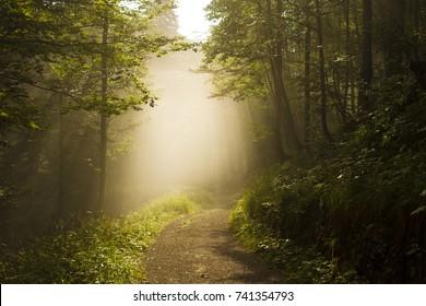 Mistig sherwood. Zon door de bomen. Pad in het bos. Monte miaron, strada militare per i forti