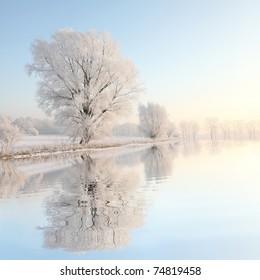 昇る太陽に照らされた凍るような冬の木。