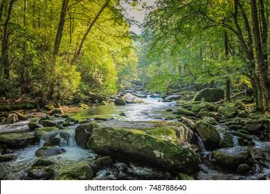 ガトリンバーグ近くのテネシー州の森を流れる小川