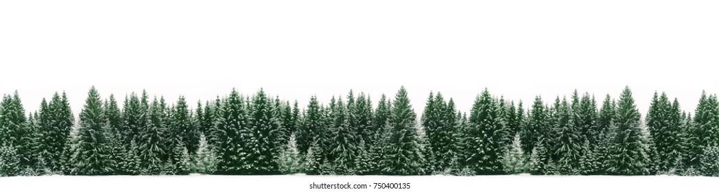 Panorama del bosque de abetos cubierto por nieve fresca durante la época de Navidad de invierno. La escena de invierno es casi duotono debido al contraste entre los abetos helados, el primer plano de la nieve blanca y el cielo