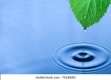 Green leaf with splashing water drops.
