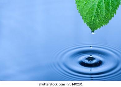 Hoja verde con salpicaduras de gotas de agua.