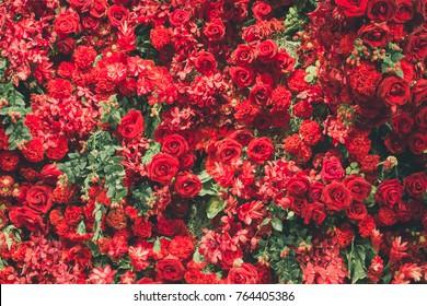 赤いバラ、赤い花、緑のモミ-クリスマスの飾り。