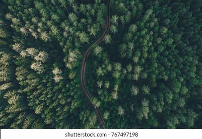 森の真ん中にある道の空撮