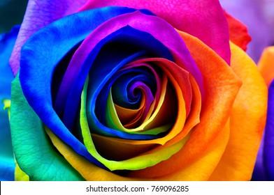 色とりどりのバラの花の背景:色の花びらを持つ虹の花