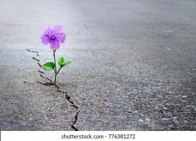 Paarse bloem groeit op crack street, soft focus Sea ..., lege tekst