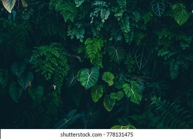 Tropische bladeren textuur, abstracte aard blad groene textuur achtergrond. Vintage donkere toon, foto kan wallpaper desktop gebruiken.