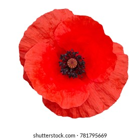 bright red poppy flower isolated on white ,top view