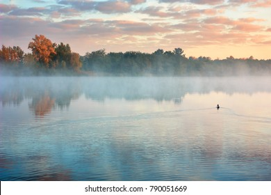 Autumn countryside landscape with river. Lone duck floats on water. Orange trees on river bank in early fog