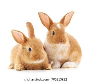 白い背景で隔離の2匹の小さなウサギ。