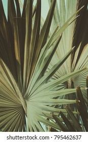 Abstract tropical background retro toned. Vintage background. Travel card. Soft focus
