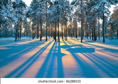 冬の森の夕日。