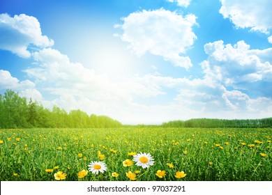 明るい晴れた日の夏の牧草地。