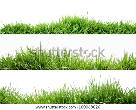 Grass #100068026