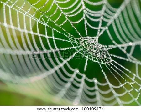 The spider web (cobweb) closeup background. Royalty-Free Stock Photo #100109174
