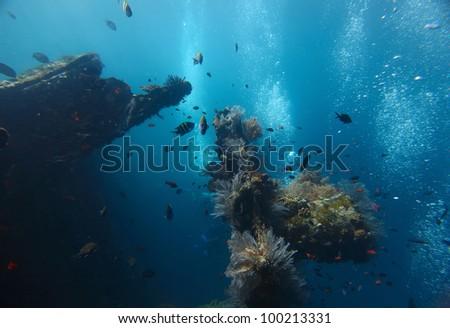 Shipwreck USAT Liberty (Tulamben, Indonesia) underwater shoot #100213331