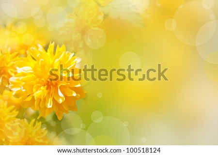 Beautiful yellow flowers on a bokeh background