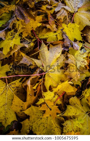 Indian summer with yellow on pathway in Latvia #1005675595