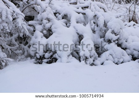 natural winter background. a beautiful sunny morning after a snowstorm. trees in the snow. warm light. #1005714934
