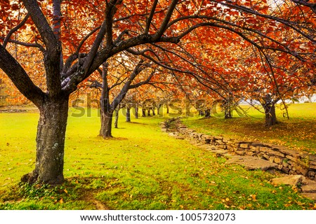 Autumn in Hurd Park, Dover, New Jersey with fall foliage on cherry trees. #1005732073