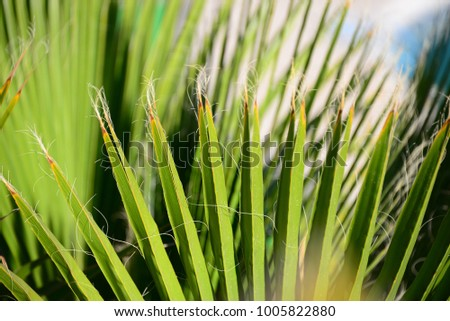 palm leaves, Spain #1005822880