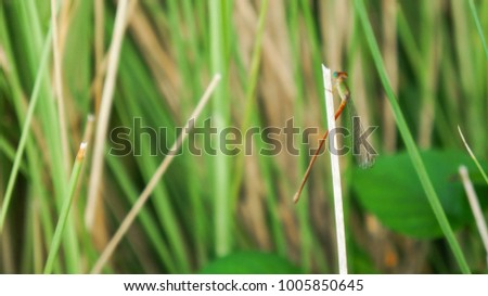 Small Dragonfly catch in dry grass in the garden #1005850645