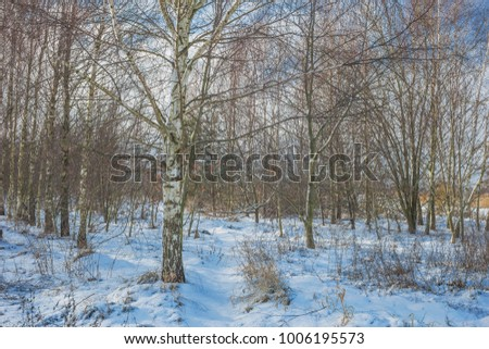 Beautiful winter landscape with big snow. Nature in the vicinity of Pruzhany, Brest region. #1006195573