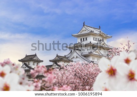 Himeji Castle and full cherry blossom, with blue sky background, Japan