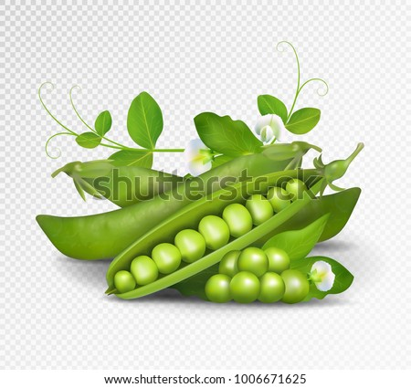 Vector green peas. Photo-realistic vector pods of green peas with leaves and flowers on transparent background. 3d green peas illustration. Royalty-Free Stock Photo #1006671625