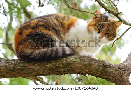 cat climbed on a tree and looks around  #1007164348